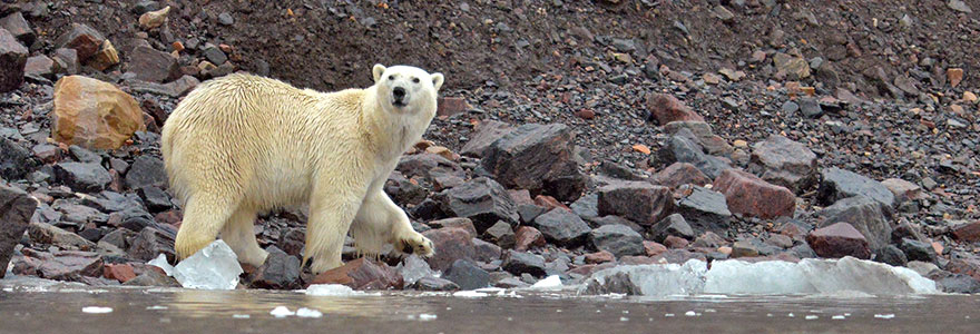 the polar bear webinar